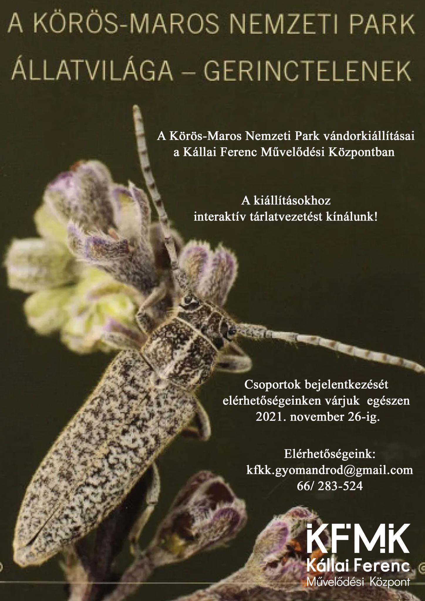 A Körös-Maros Nemzeti Park Állatvilága - Gerinctelenek
